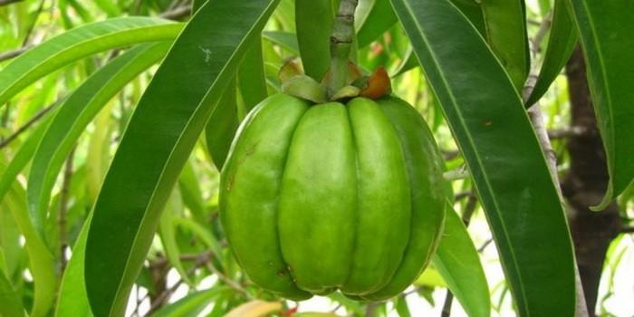 il frutto della Garcinia Cambogia